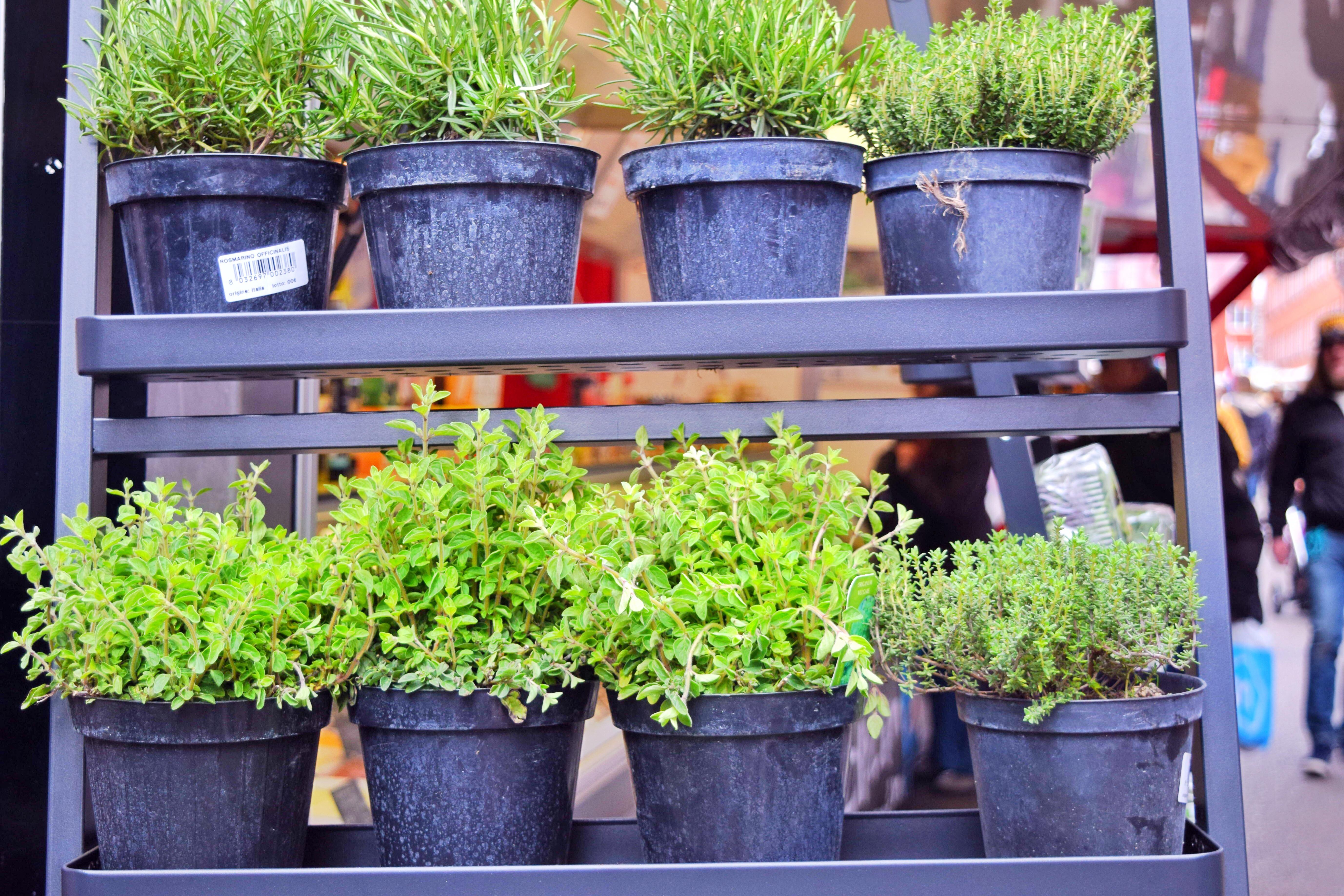 Farmers Market - Fresh Herbs