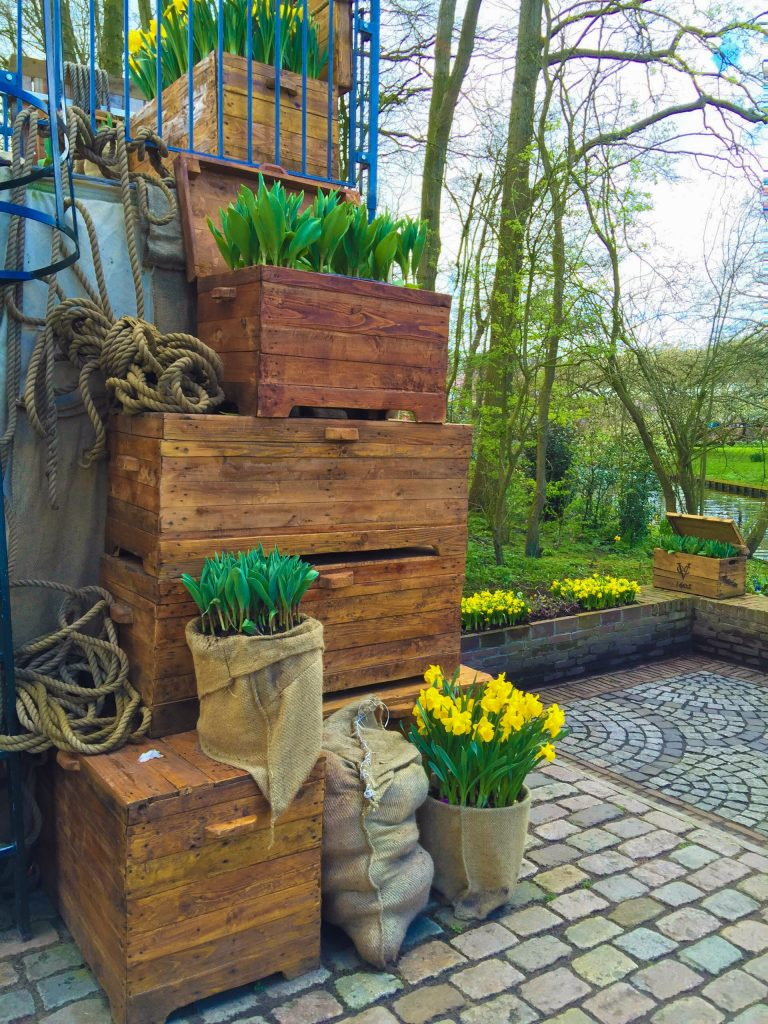 Boxes of daffodils