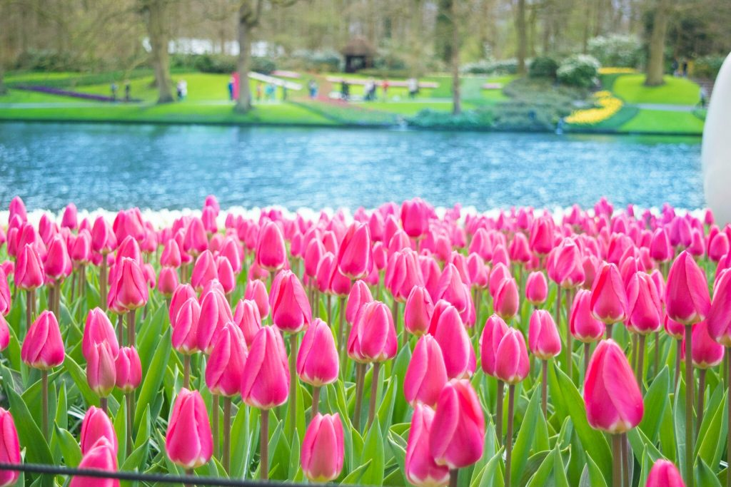 """""""I must have flowers, always, and always""""- Claude Monet"""