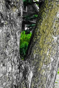 The Bark; Black and Green