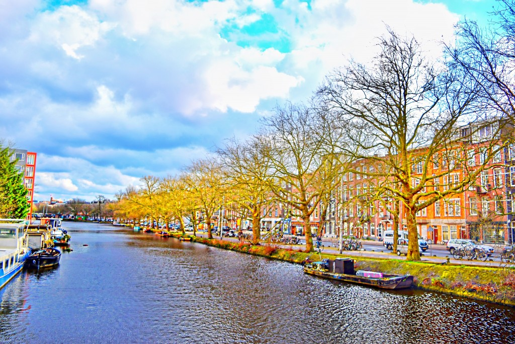 Waiting to bloom - Amsterdam