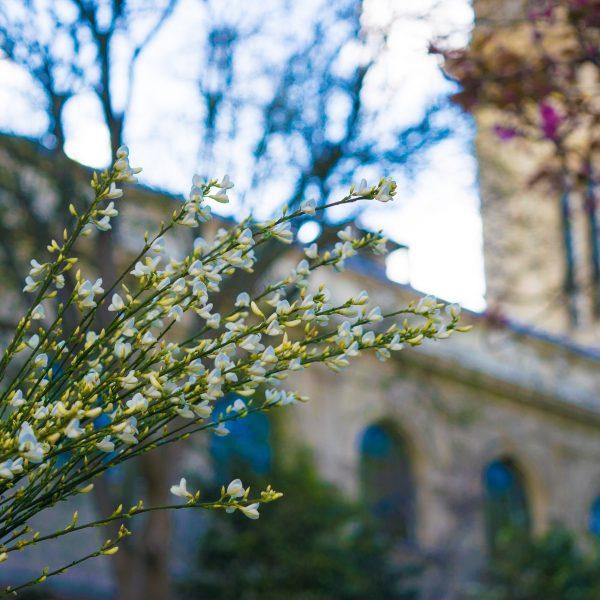 White spring blooms