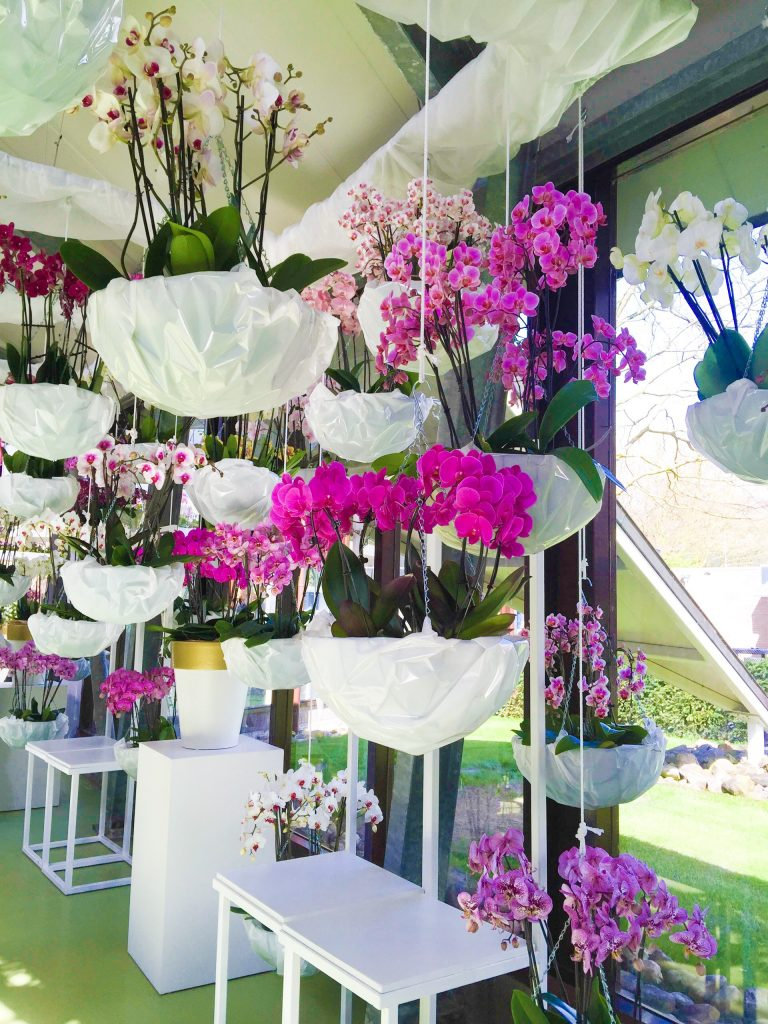Orchids exhibit
