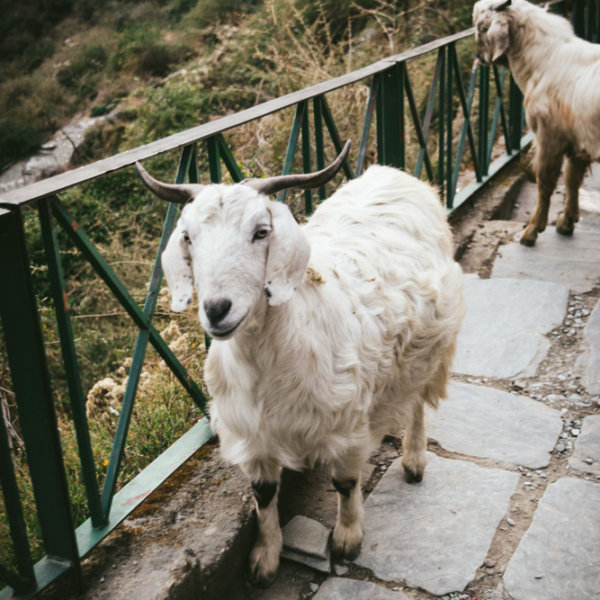 Bhagsu Nag Waterfall Pathway Himachal Pradesh