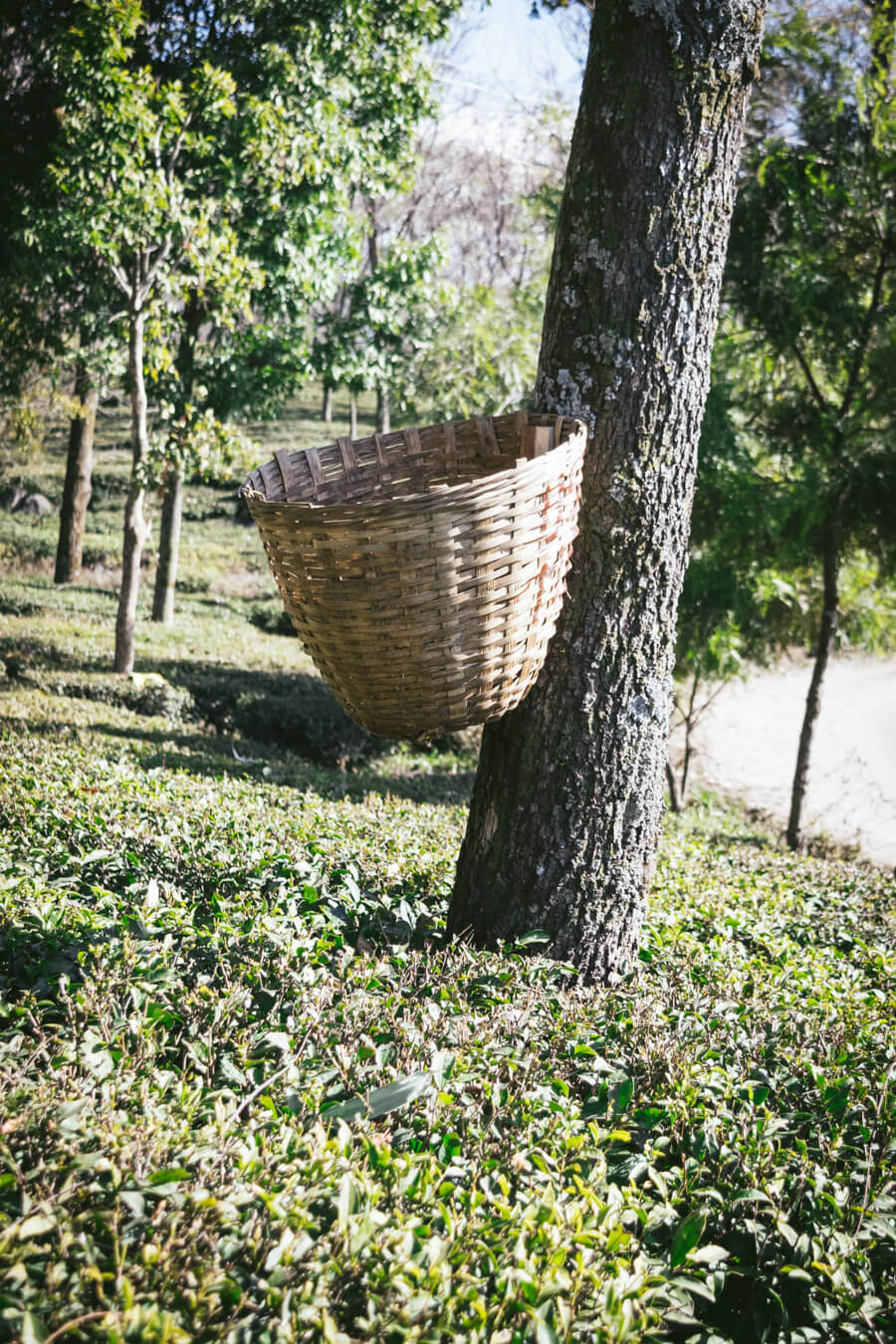 The Tea basket.